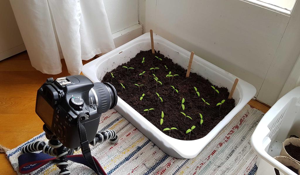 Timelapse: Film planterne gro